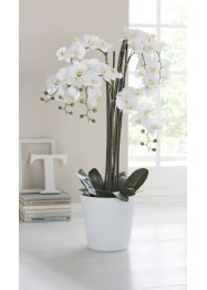 Kunstblume XXL Orchidee, bpc living bonprix collection
