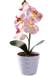LED-Orchidee im Topf, bpc living