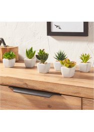 Kunstpflanzen Sukkulenten (6-tlg.Set), bpc living bonprix collection