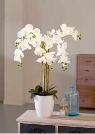 LED-Kunstblume Orchidee, bpc living bonprix collection