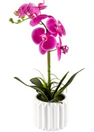 Kunstpflanze Orchidee, bpc living bonprix collection